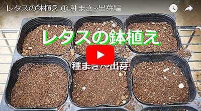 レタスの種まきの動画