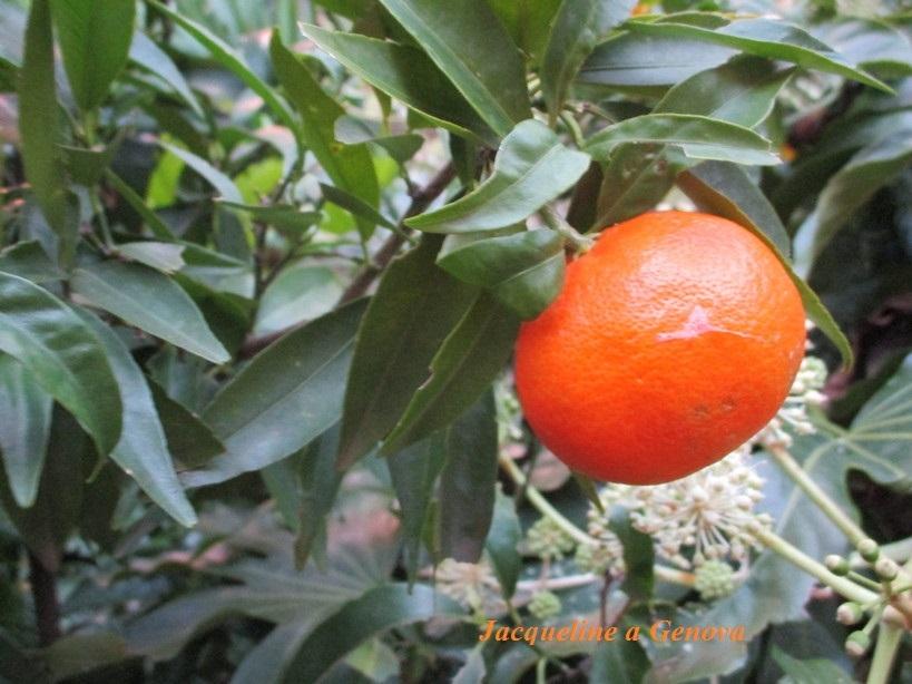 arancia1912