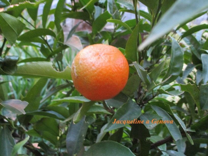 arancia2_1912