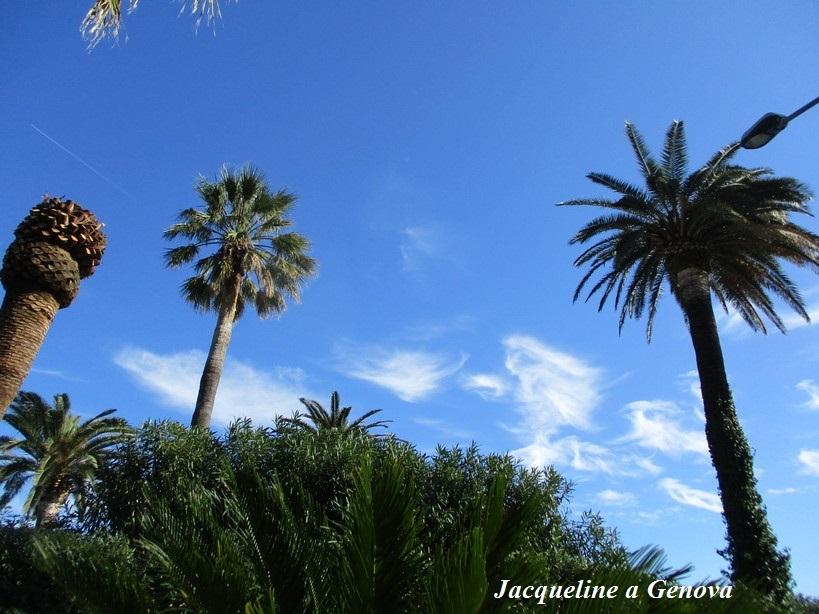 palme2_200215
