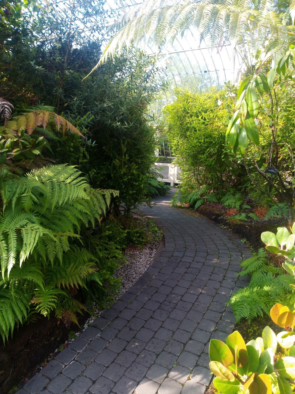 Dublin National Botanic Garden_190826_0020