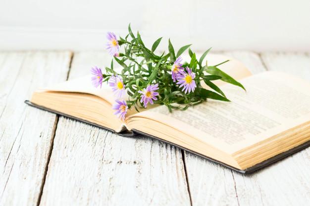 blooming-virgin-asters-flowers-open-book-window_84176-299.jpg