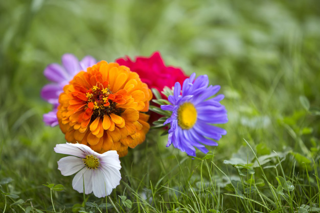 close-up-beautiful-autumn-bright-multicolored-field-flowers-composition_127089-742.jpg