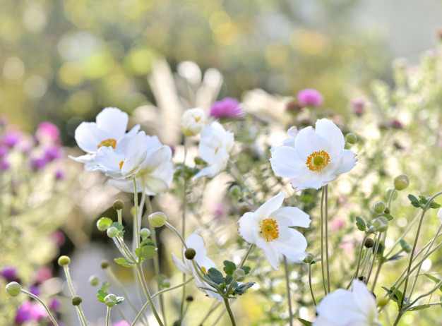 pretty-white-flowers_100787-1637.jpg