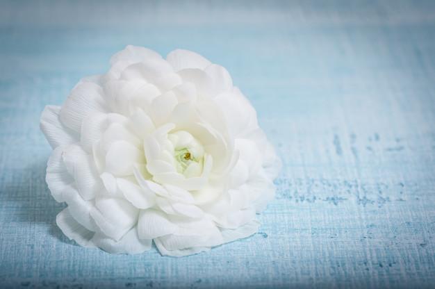 white-flower-light-blue-fabric-ranunculus-flower_78048-332.jpg