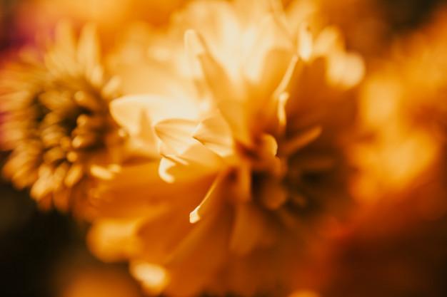 yellow-little-flowers-hojas_125525-88.jpg