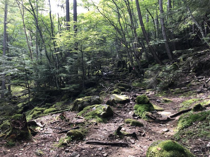 甲武信ヶ岳135