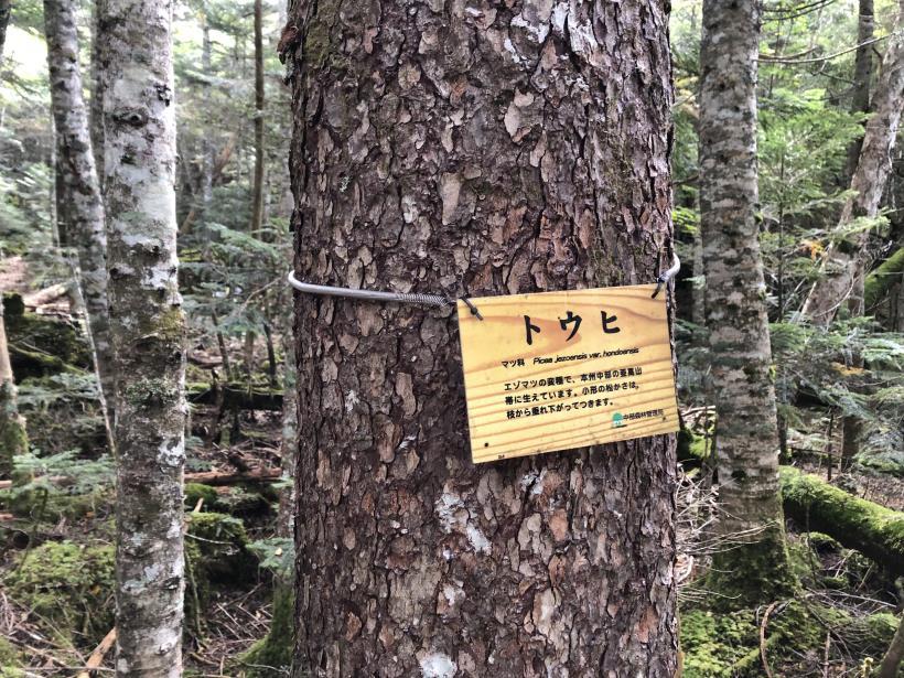 甲武信ヶ岳223