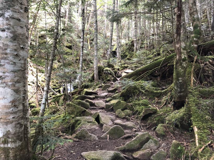 甲武信ヶ岳237