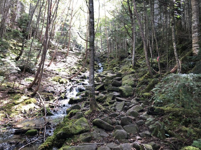甲武信ヶ岳239