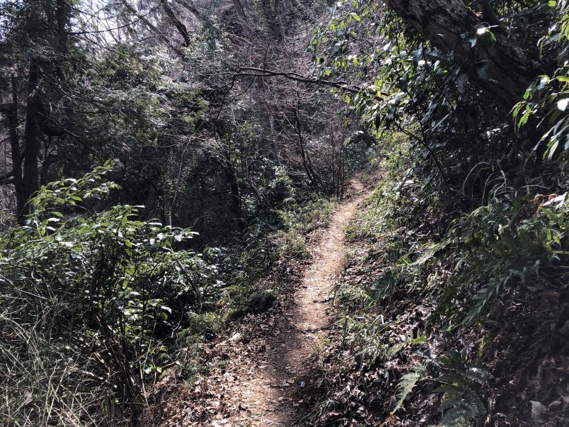 津久井湖城山32