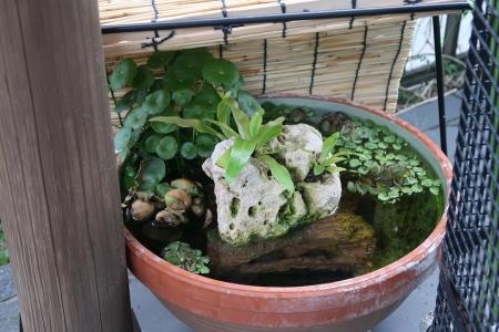 メダカの鉢