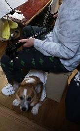 嵌る犬 イヌヌワン