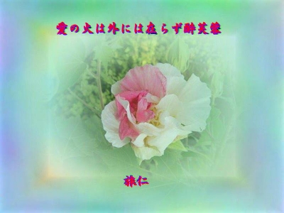 『 愛の火は外には在らず酔芙蓉 』TAO575交心zwq0803