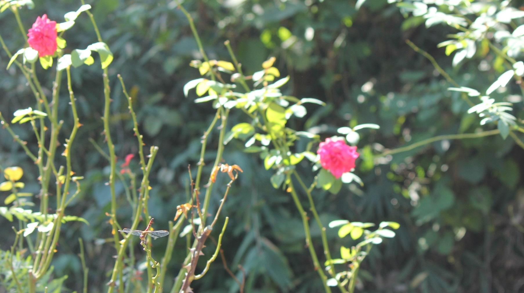花フェスタ2019-3