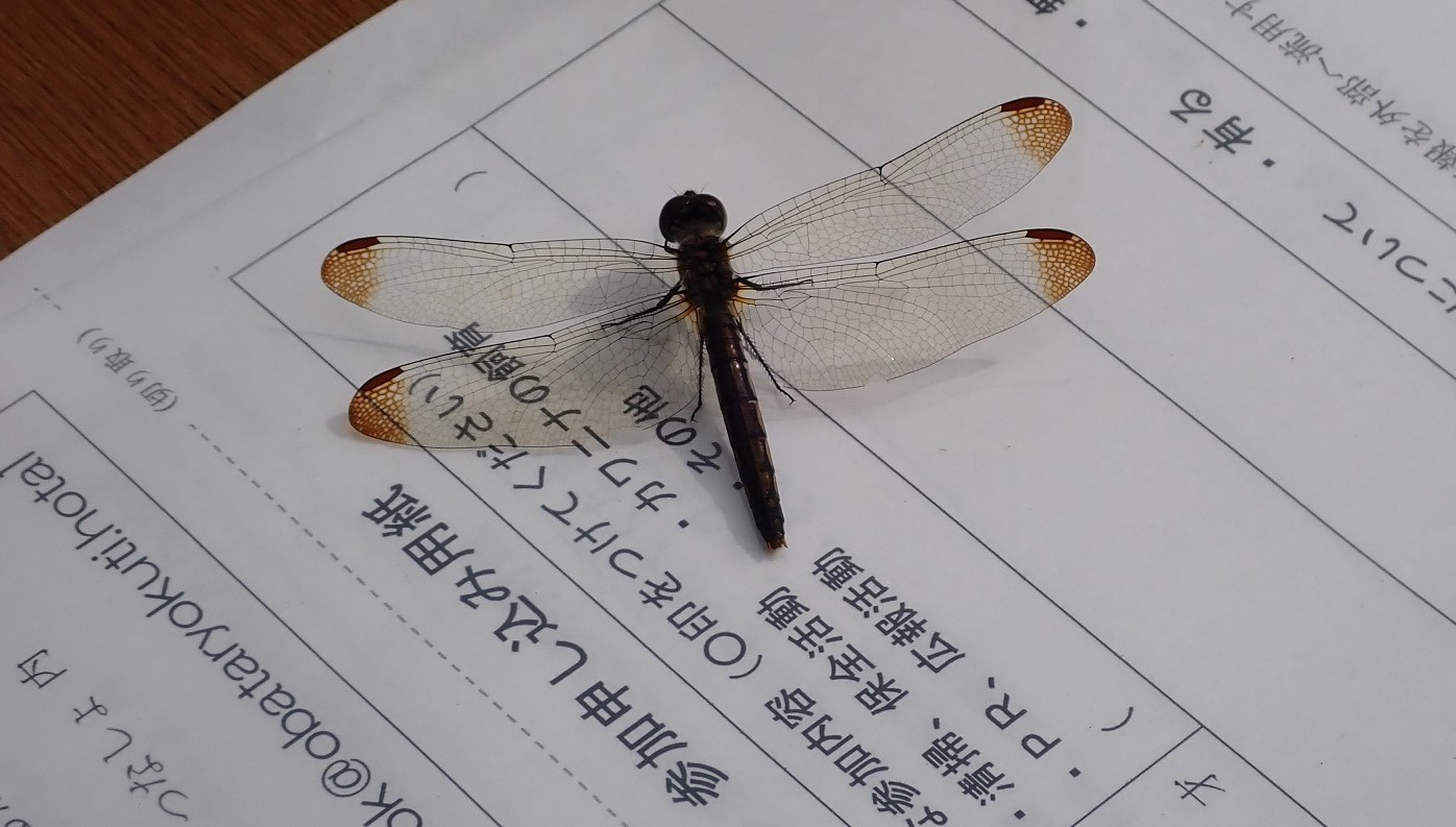 ホタル秋まつり2019-3