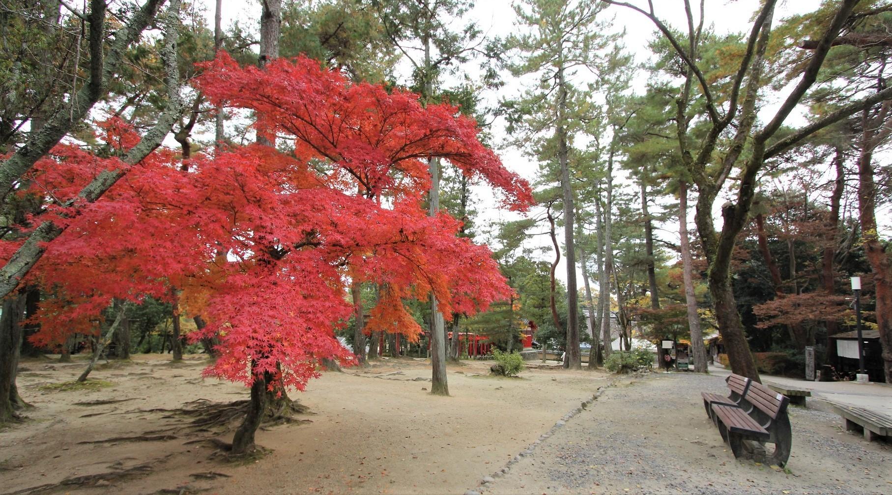 伊賀 上野公園2