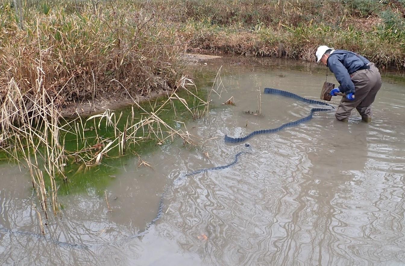 トンボ池の保全2