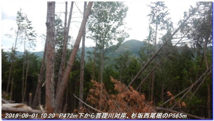 190601_AkaoYama_BisyamonYama_014.jpg