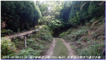 190605_BisyamonDaniNishiOne_NishiSawayama_043.jpg