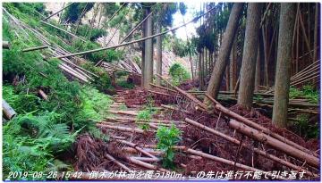 190826_Takahana_ShirosunaYama_SawanoIke_060_20190912111829677.jpg