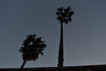 伊比井駅椰子の木