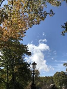 清里の森19年10月