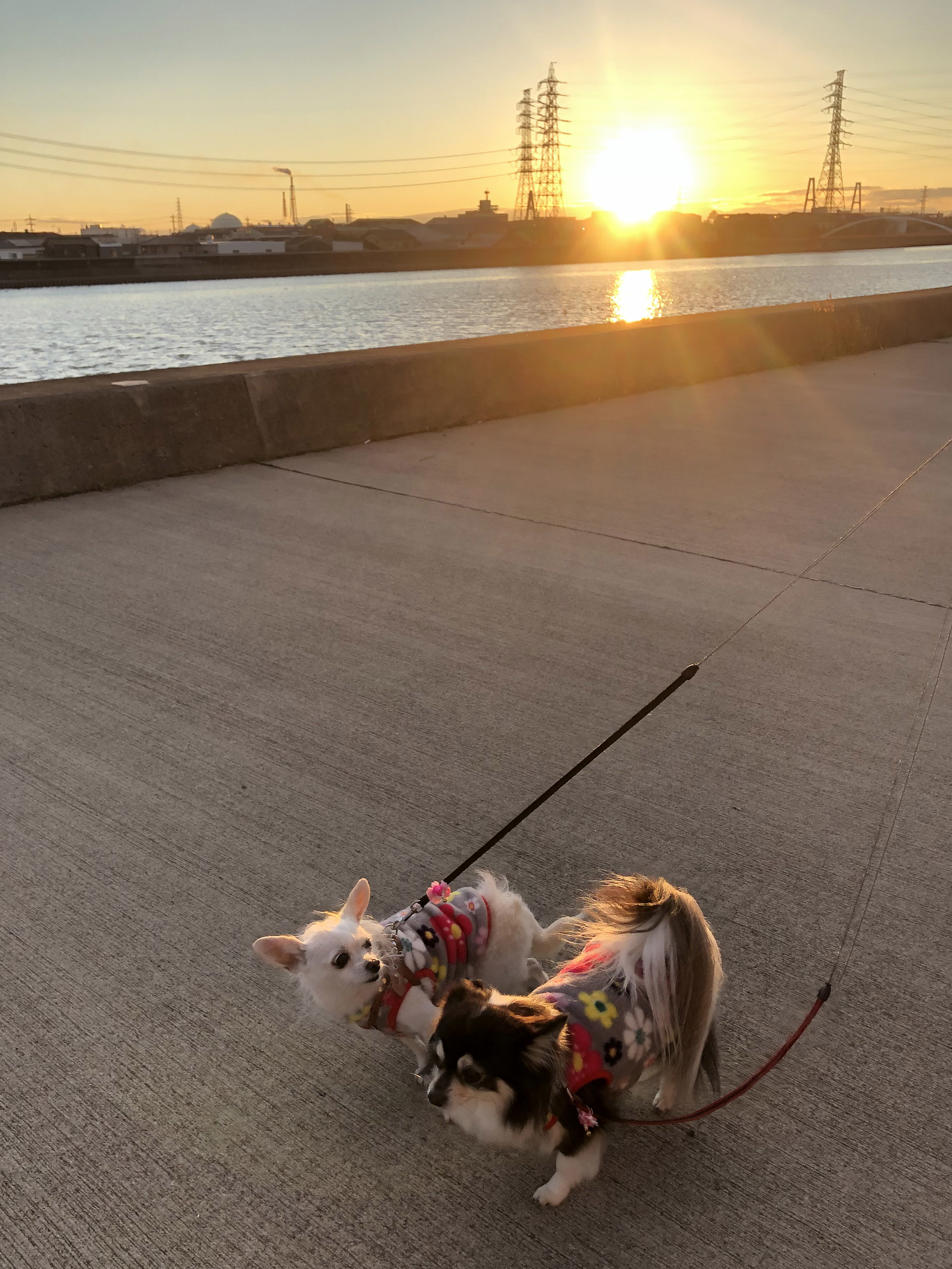 2019_年の瀬散歩01