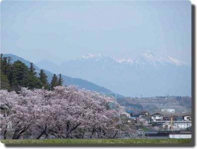 mini_14_20160406_oobosi_mini_12_kajika_P4068592.jpg