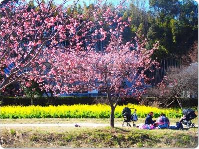mini_23_sakura_P2230897.jpg