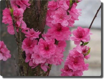 mini_3312_teru_P4213662.jpg
