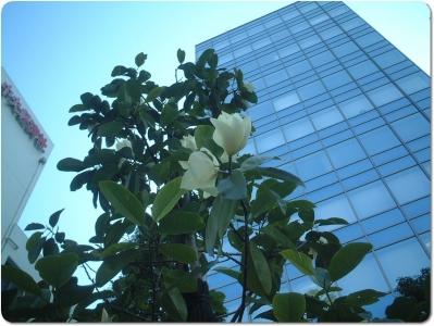 mini_6619_gyokusinboku_DSCF0398.jpg