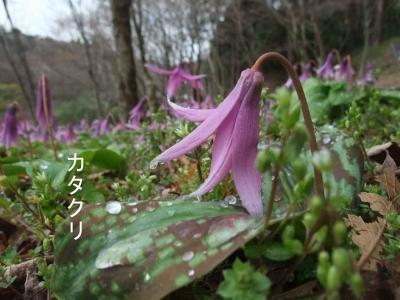 mini_8811_katakuri_DSCF5368.jpg