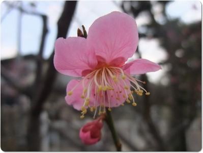 mini_8817_hanakami_DSCF1579.jpg