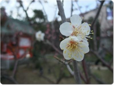 mini_8819_kousyuukoume_DSCF1559.jpg