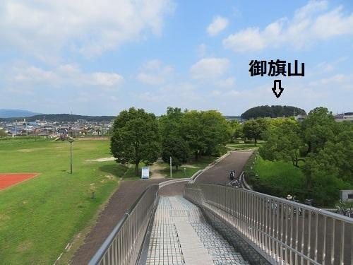 hinoki (7)