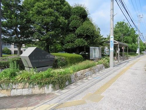 yazakoj (2)