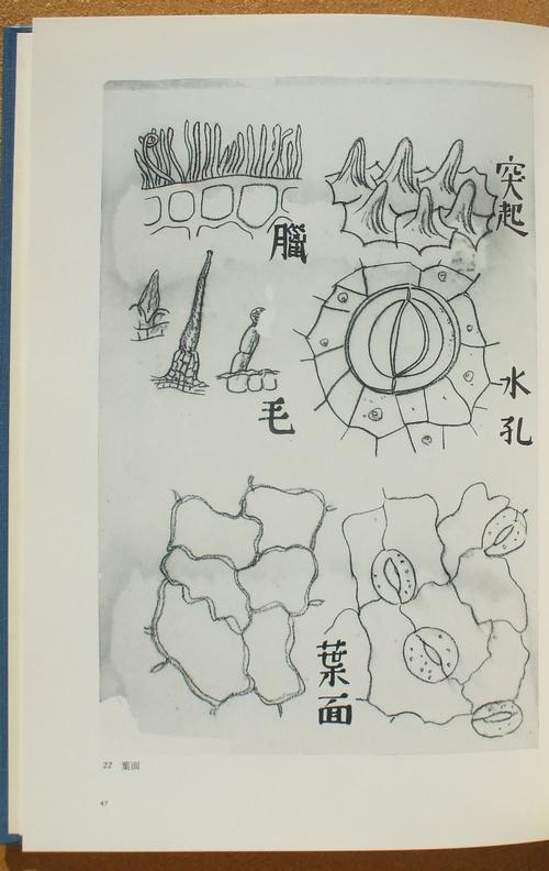宮沢賢治 科学の世界 06