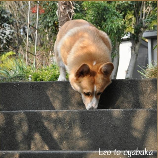 レオと階段