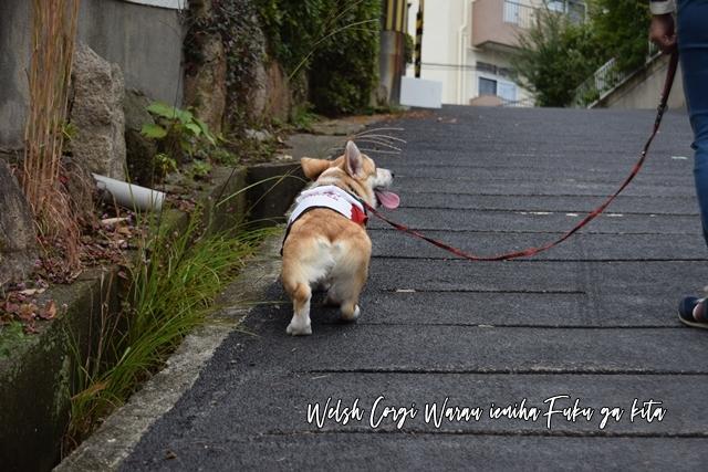 ロング散歩へ