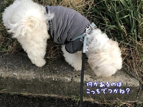 秋の散歩12