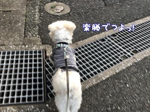 秋の散歩19