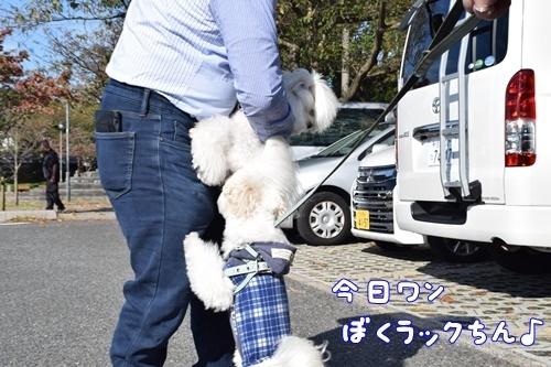 りんちゃん訪問2