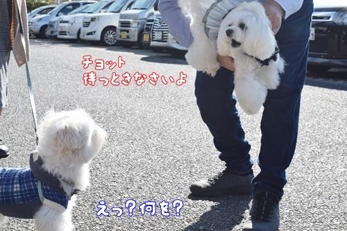 りんちゃん訪問3