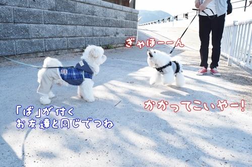 りんちゃん訪問5