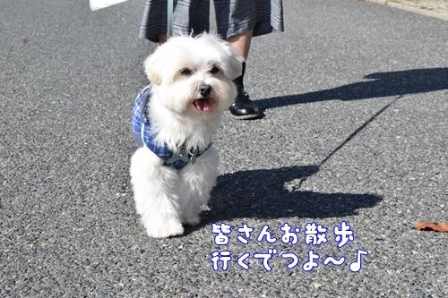 りんちゃん訪問7