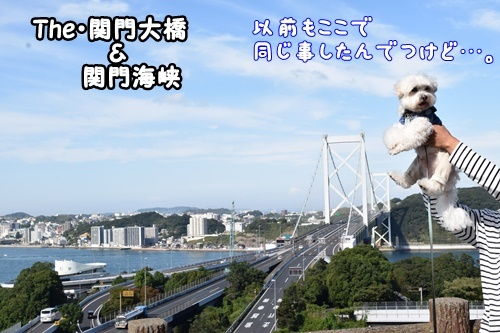 りんちゃん訪問9