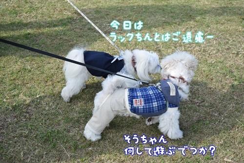 合コン散歩6