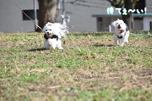 合コン散歩9