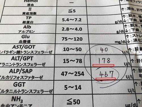 12月検査10